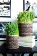 cool-woven-planters-with-wheatgrass-will-be-a-nice-modern-decoration-idea-for-any-space