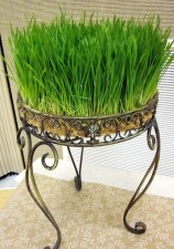fresh-wheatgrass-decor-ideas-to-try-in-spring-2