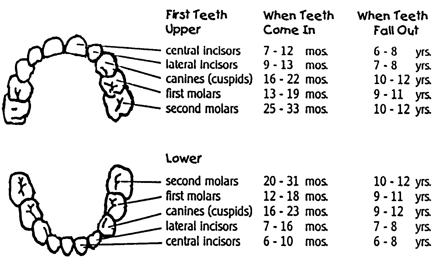 The Tooth Fairy Index
