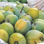 Khirshapat mango to get GI recognition
