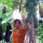 Farmers eyeing bumper summer vegetables output in Rangpur