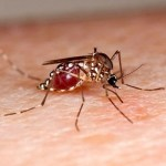 Most dengue patients return home, safely
