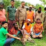 Deer rescued from Sarankhola village released in Sundarbans