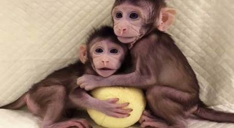 Chinese scientists have 'no plan' to clone humans after creating cloned monkeys