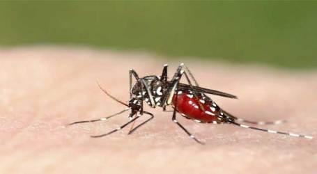 Ahmedabad : Increase in Malaria, dengue cases