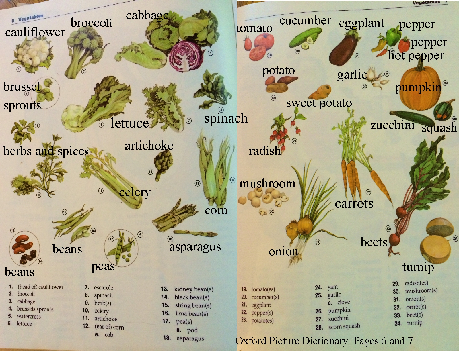 Vocabulary Fruits And Vegetables English