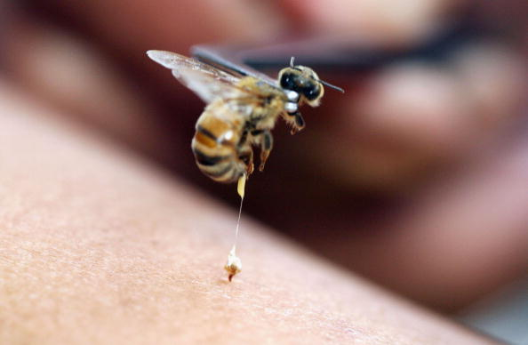 Learn English Funcast Episode 136 – A man stung by a bee, the hardest mint in town, and words of wisdom.