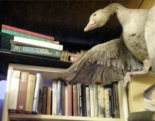 A Quirky Stuffed Seagull looks after the bookshop