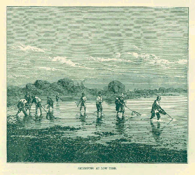 1883 Shrimping at Low Tide / Public Domain - Frederick Whymper