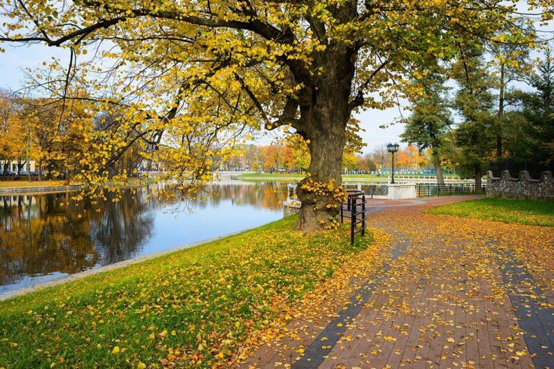 Golden Autumn All Around Russia