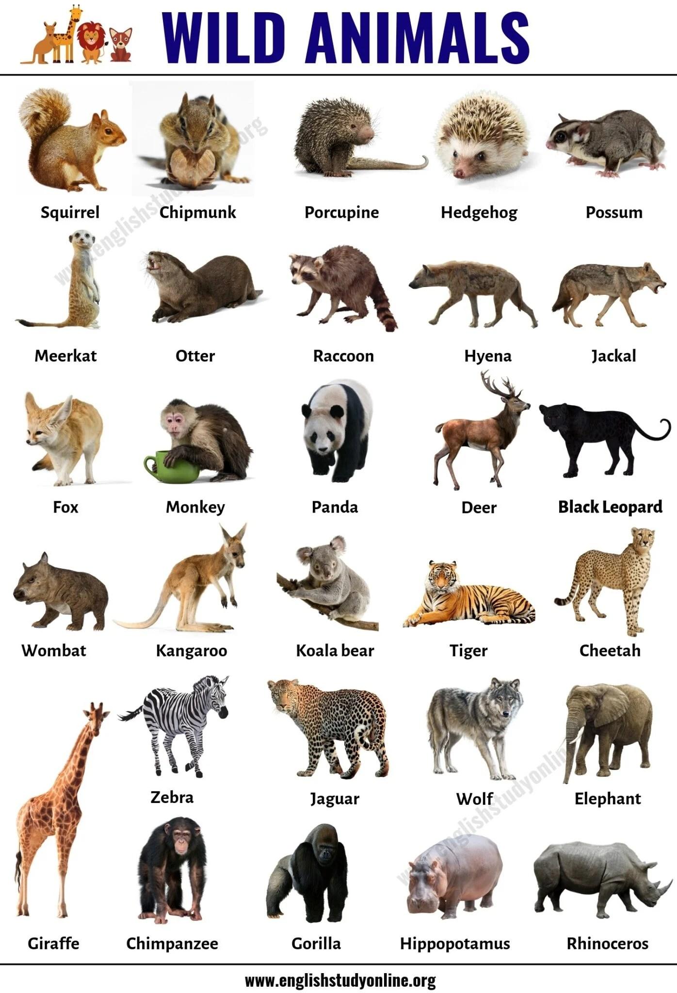 Wild Animals List Of 30 Popular Names Of Wild Animals In