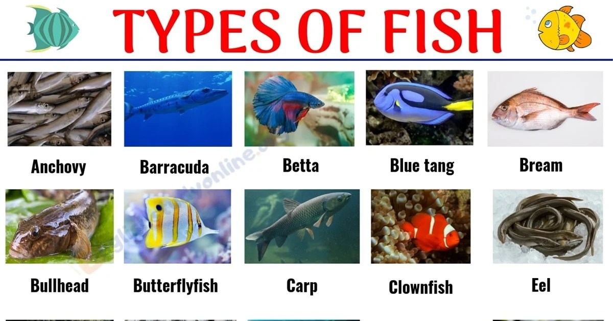 Types Of Fish List Of 29 Popular Fish Names With Pictures In English English Study Online