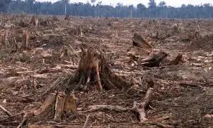 Short speech on deforestation