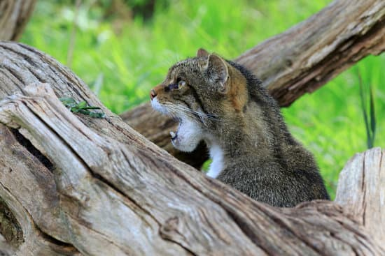IELTS Animal Vocabulary by Andre Turner @ EnglishWithAnExpert.com
