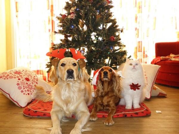 Две кучета и котка до коледна елха