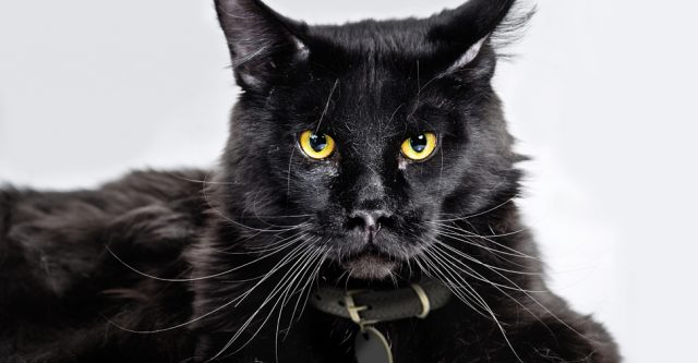 tumblr stará černá kočička černá gay muži sex videa