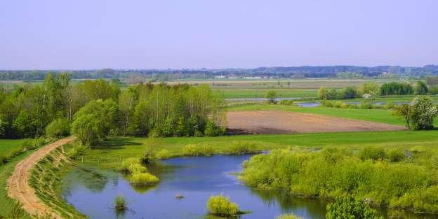 Řeka Narew, v jejímž okolí byla lebka nalezena