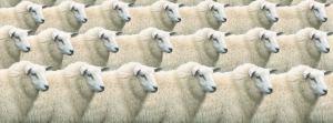 Je po myších a ovcích možné naklonovat i Einsteina?
