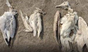 Za záhadných příčin vymírají ptáci. Jde o boží trest?
