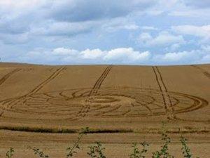 Kruhy v obilí jako místo magického rituálu. Co znamenají paví pera nalezená uvnitř?