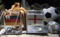 World Cup 2010: Germany-England Game - Paul The Octopus Prediction