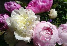 お花がある暮らしは良いことありそう!確実に気持ちがアップするよ!