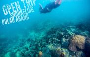 Open Trip Snorkeling and Scuba Diving in Abang Island, Batam