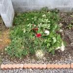 花壇で手作り堆肥!雑草を発酵させてみました!