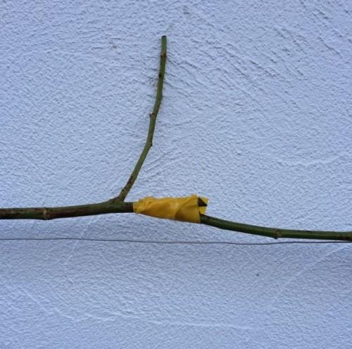 枝が折れた場合テープで補強