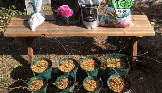 バラの育て方!肥料はどれが一番効く?その1