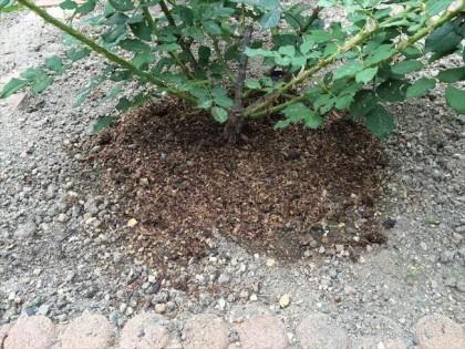 堆肥でマルチ