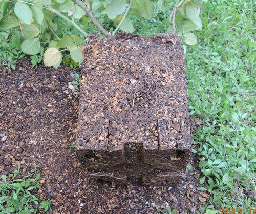 有機入り化成肥料の根鉢1