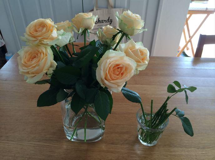 挿し木するバラの切り花品種