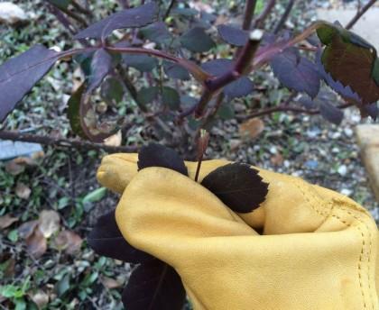 葉をむしる