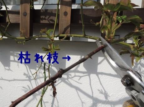 枯れた枝も切る
