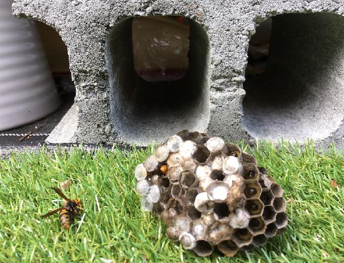 基礎のブロック内に巣があった