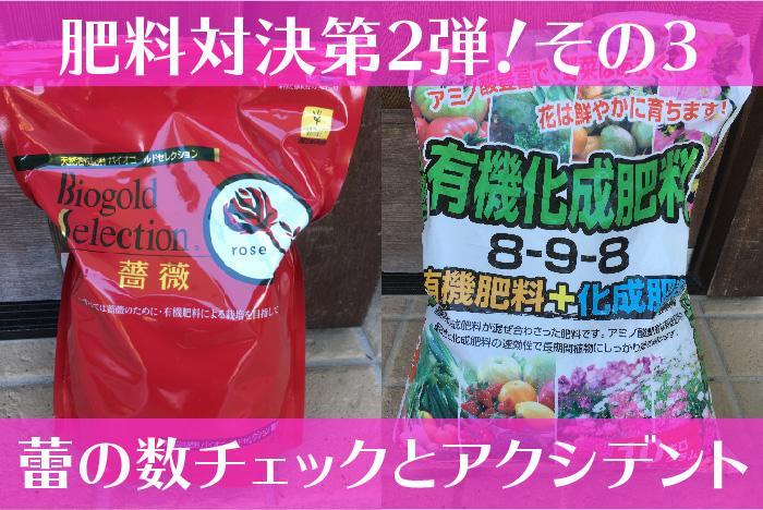 バイオゴールドセレクション薔薇の肥料対決3-01