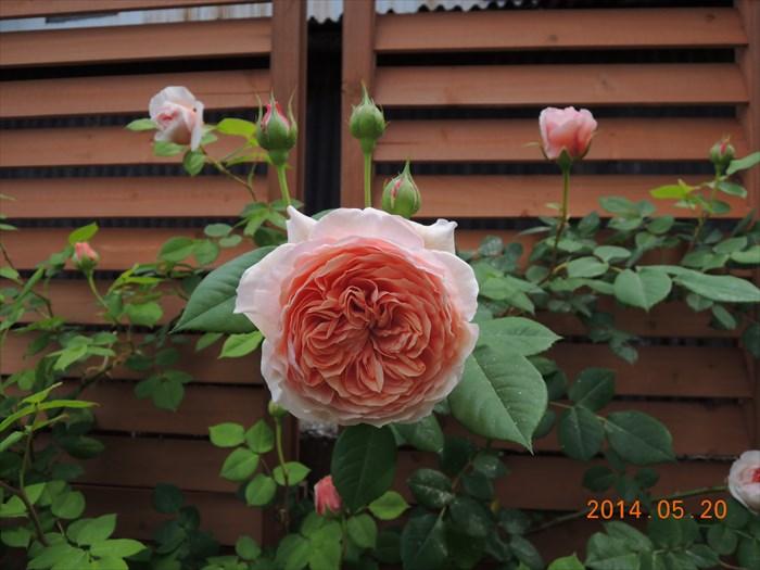 ウィリアム・モリスの花形