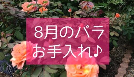 8月のバラの育て方!真夏のお手入れ!