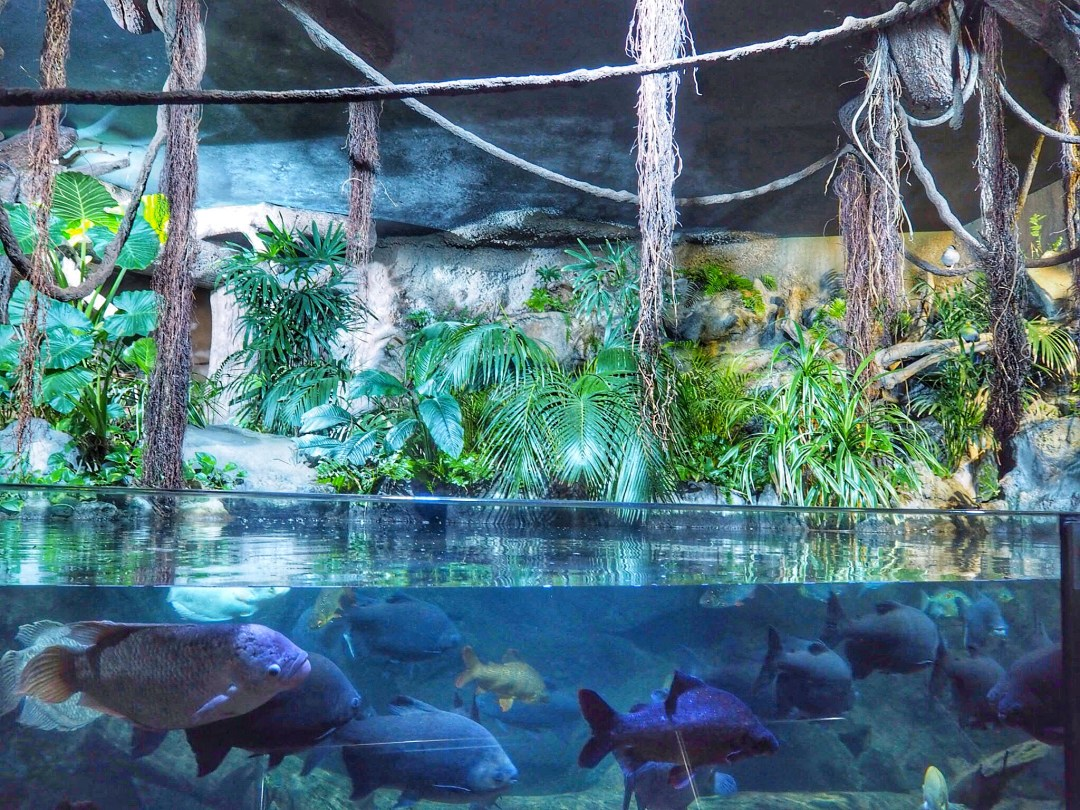 Loro Parque Zoo Fish - Enjoy the Adventure