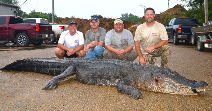 alligator-length-record.jpg