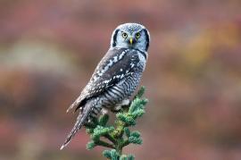 Credit: Jacob Gaposchkin Denali National Park and Preserve