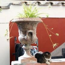 travel-italy-positano-cat