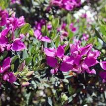 travel-italy-positano-flowers