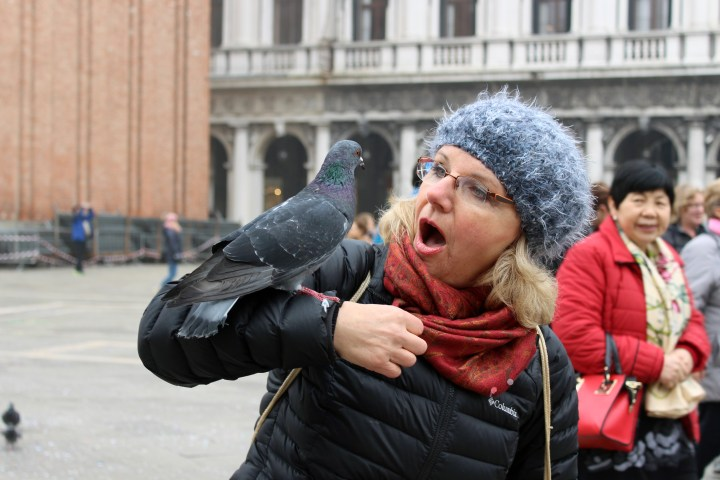 Friendly pigeons land on a tourist in Saint Marks Square
