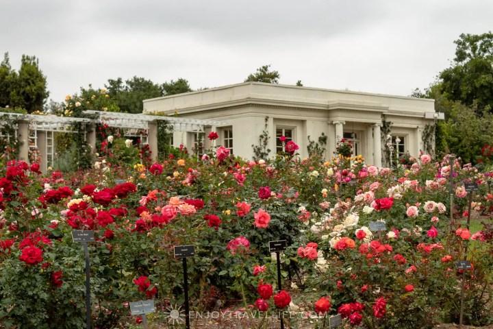Hidden gems of L.A. - Rose garden at The Huntington