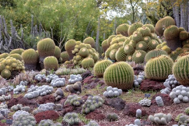 Dessert Garden - The Huntington Botanical Gardens
