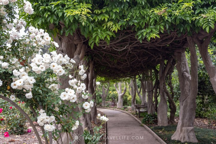 Rose-lined Arbor at The Japanese Botanical Garden - The Huntington