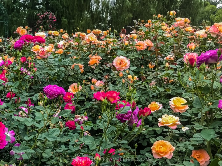 Spectacular Botanical Gardens - The Huntington Rose Garden