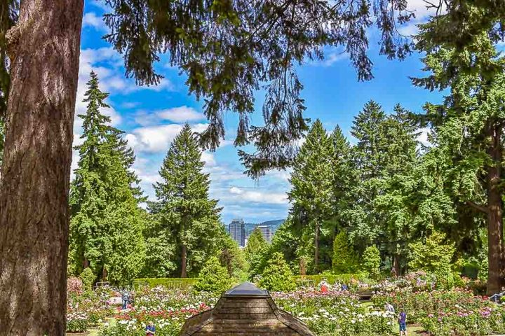 International Rose Test Garden (Portland, Oregon, USA) | World Botanical Gardens